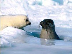 Фото диких животных в природе