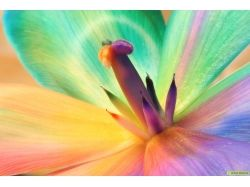 Фото цветные цветы
