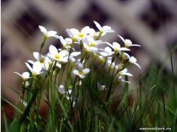 Цветы маленькие фото