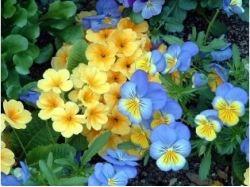 Красивые картинки фото цветов
