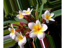 Красивые цветы картинки хорошего качества