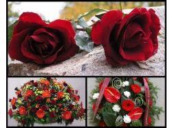 Какие цветы