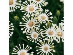 Абстрактные картинки цветов