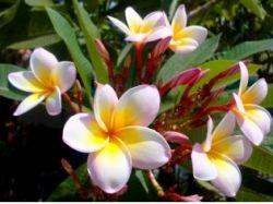 Абстрактные картинки цветов 2