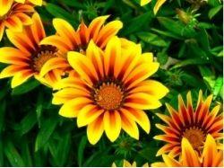 Абстрактные картинки цветов 4