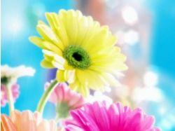 Картинки на компьютер цветы