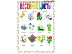 Картинки цветы ромашка для детей