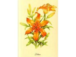 Цветы маки картинки нарисованные