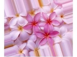 Найти картинки красивых цветов