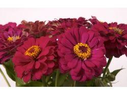 Цветы список с картинками