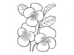 Раскраски картинки для девочек цветы