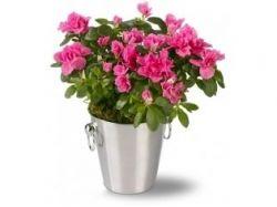 Современные цветы фото
