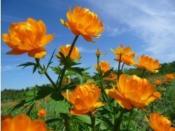 Картинки цветы в hd качестве