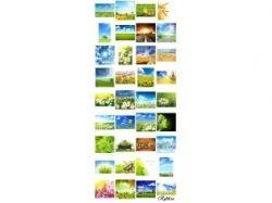 Цветы фото поля