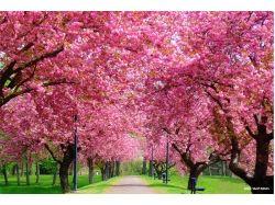 Красивые картинки весна природа