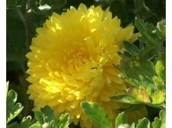 Картинки первые весенние цветы