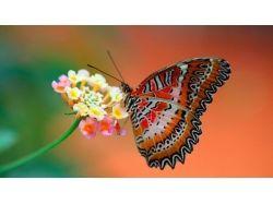 Красивые картинки бабочки и цветы