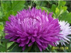 Показать картинки цветы