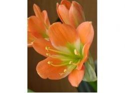 Картинки цветов на аву вконтакте