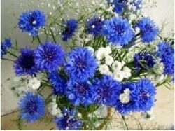 Красивые картинки цветы ромашки