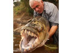 Самые страшные животные мира фото