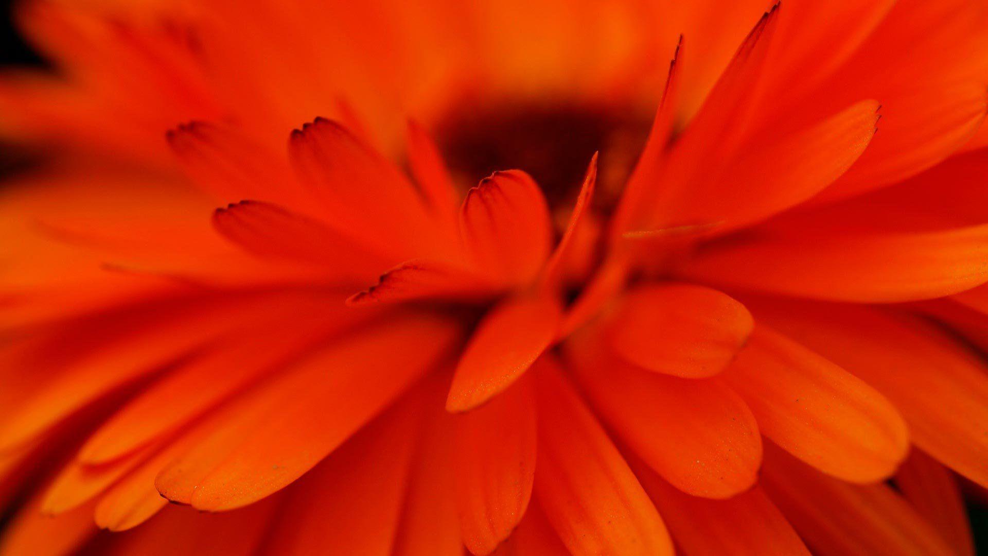 оранжевый цветочек онлайн