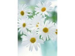 Домашнее фото цветов