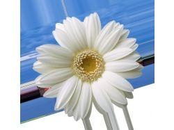 Цветок на прозрачном фоне картинки