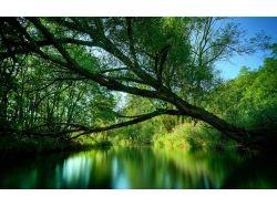 Скачать картинки природы весной