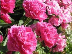 Свадебные цветы фото
