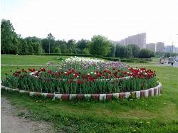 Интересные картинки цветы