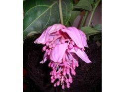 Цветы фото уход