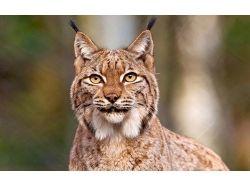 Смотреть фото животных бесплатно