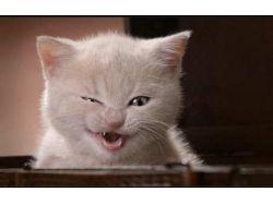 Смешные животные видео
