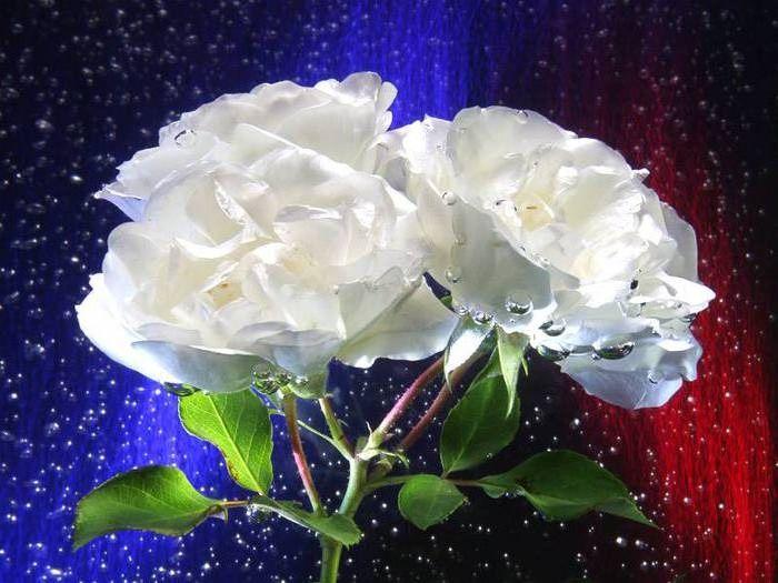 Гифы белые цветы, очень любимый
