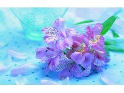 Нежные цветы картинки