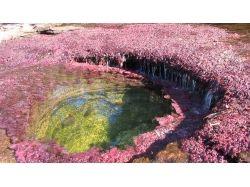 Фото красивых цветов мира