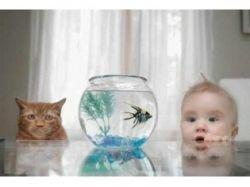 Животные фото смотреть 2