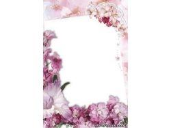 Бесплатно смотреть картинки цветы