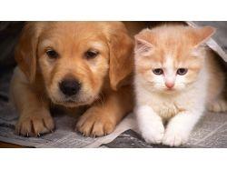 Картинки помощь животным