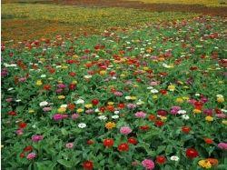 Картинки поля с цветами