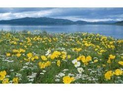 Сказочный цветок картинки для детей