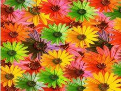 Картинки очень много цветов
