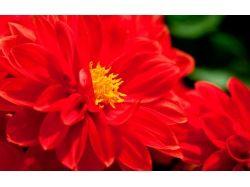 Фото и название цветков