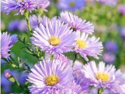 Название цветков с картинками