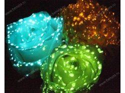 Смотреть фото цветов 3