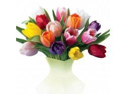 Смотреть фото цветов 4