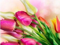 Картинки цветы 480 800