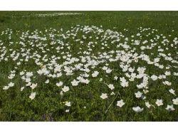 Картинки цветы на лугу