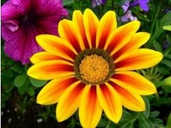 Картинки абстракция цветы